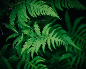 Hard to take a bad picture of a frondy fern